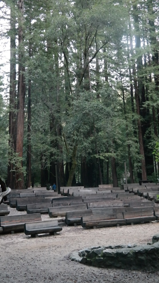 Redwood Trees and Amphitheater